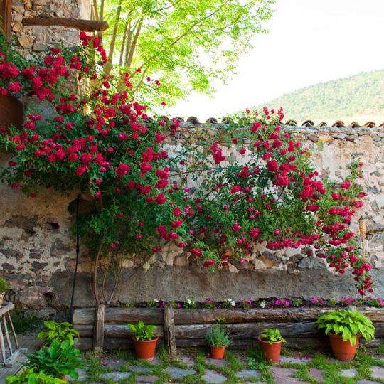 http://casadelbatlle.com/wp-content/uploads/2016/03/Casa-del-Batlle-La-Era-7-540x540.jpg
